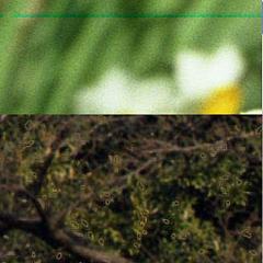 20070317_100yen_film_04_blog_import_529f200deee0e