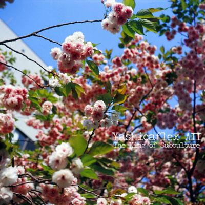 20110422_film_genzoudai_35mm_01_blog_import_529f1fdae6742